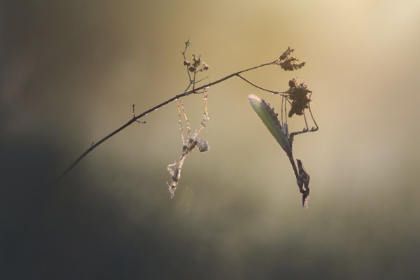 Sébatien Blomme